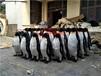 影視企鵝道具仿真展覽企鵝模型