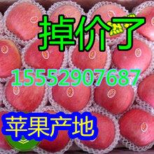 山东红富士苹果产地价格红富士苹果批发行情图片