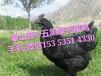 延安土鸡苗,陕西土鸡苗,五黑绿壳蛋鸡