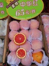 中华红脐橙大量出售图片