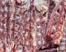 威海市供应冷冻羊蝎子冷冻羊腿骨冷冻羊蹄冷冻羊鞭