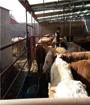 肉牛销售专题页为您提供肉牛销售各种品种
