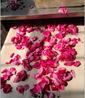 玫瑰花烘干