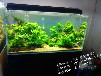 专业鱼缸鱼池清洗养护鱼缸鱼池水草造景专业上门