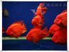 无锡专业维修水族箱上门清理鱼缸清洗鱼缸安装布景