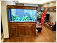 专业清洗鱼缸鱼缸搬家鱼缸长期维护销售各种观赏鱼图片
