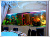 上海大型魚缸制作廠家