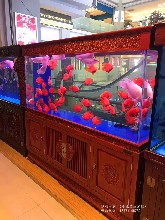 南京实木鱼缸厂家