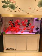 无锡观赏鱼市场图片