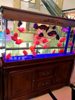 清洗各种鱼缸消毒鱼缸鱼缸包月观赏鱼搭配布景