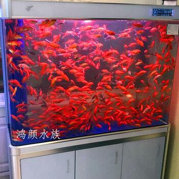 無錫觀賞魚市場在哪里