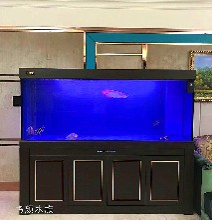 无锡鱼缸定做无锡鱼缸布景无锡鱼缸安装
