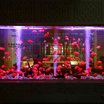 無錫觀賞魚市場發財魚錦鯉魚魚地圖魚金龍魚銀龍魚