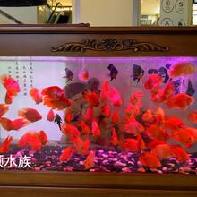 無錫有魚缸清洗上門服務圖片