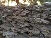 供应天然英石天然假山石销往上海英石产地直销大量批发
