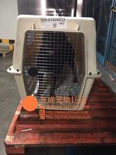 狗狗随机托运到广州宠物随机托运宠物托运流程图片