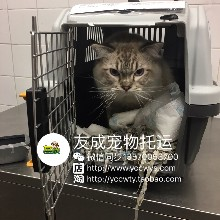 宠物回国找友成宠物回国清关公司国际宠物回国图片