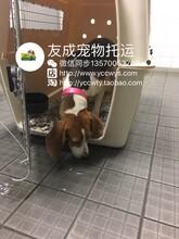 广州宠物托运价格航空托运费用广州宠物空运火车托运广州省内汽车托运图片