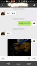 宠物狗猫托运到香港台湾电话图片