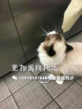 广州火车托运到全国广州空运狗狗广州宠物航空托运猫猫航空托运