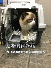 专业宠物托运到港澳台狗狗到香港免隔离猫猫到香港免隔离