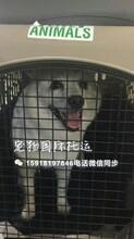 兔子回国龙猫回国宠物国际托运免隔离宠物托运流程价格咨询图片
