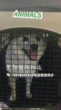 宠物到港澳台宠物到香港托运当天到达狗狗到香港免隔离猫猫到香港免隔离