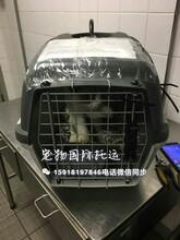 宠物出国手续带宠物出国宠物出国代理带宠物回国免隔离图片