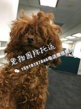 火车怎样托运狗狗广州火车托运宠物宠物火车托运电话图片