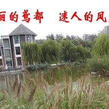 翻译工作是一项复杂的系统工程,潍坊信达雅翻译为您提供解决方案