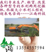 陕西省江南水陆两用挖掘机出租水挖出租