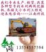 重庆江南水陆挖掘机出租水上挖掘机出租