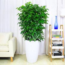 武汉室内植物租摆室内绿植价格,武汉室内绿植租赁花木租摆