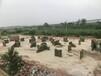 广东珠海真人CS装备厂家批发户外拓展器材景区山庄赚钱