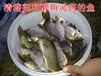 农药赛丹多少钱一瓶药鱼能吃吗?硫丹一亩地用多少赛丹