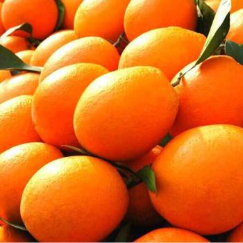 湖北脐橙/哪里有脐橙/秭归脐橙