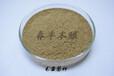 毛霉菌腐乳发酵