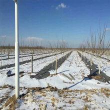 河南渗水防草地布无花果园渗水防草地布的使用寿命图片
