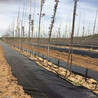 果树园保湿防草布