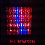 鸿悦牌LED植物生长灯100w200w大功率植物补光灯生产厂家图片