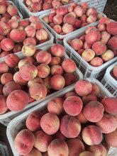 河北大红桃,鲜桃,毛桃,油桃图片