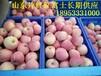 莒县苹果供应万亩红富士苹果批发