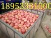 山东红将军苹果价格红富士苹果产地批发价格行情