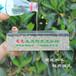 徐州陶瓷透水磚廠家,透水磚廠家電話888