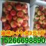 山东油桃批发价格图片