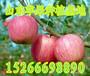 山东藤牧苹果