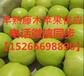 山東藤木蘋果產地供應藤木蘋果大量上市藤木蘋果脆甜可口規格60-80