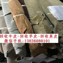 广州收购牛皮头层.回收真皮价格.收购羊皮库存图片
