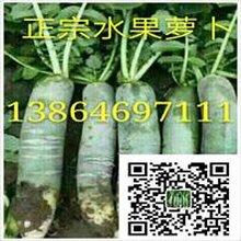 潍县萝卜产地价格最低图片
