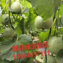 山東濰坊綠寶甜瓜產地行情好價格最低圖片